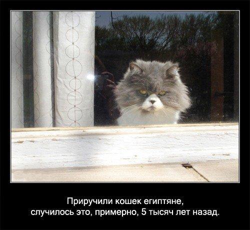 Все факты о кошках