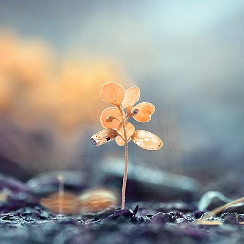 Красивые картинки от Mohammad Ahmed Fikree (23 фото)
