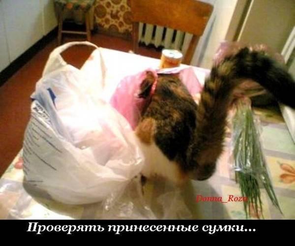 Обязанности вашего кота