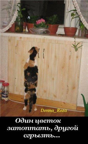 Обязанности домашнего кота (19 правил)