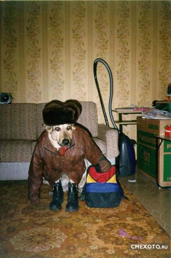 Животные в шапочках (16 фото)
