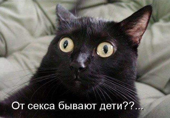 Котоюмор на Смехоте (32 фото)