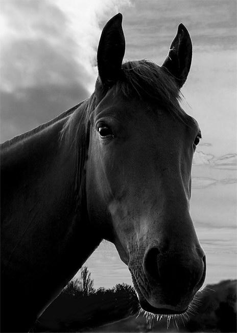 Лошади - Фотограф Юрий Mart (15 фото)
