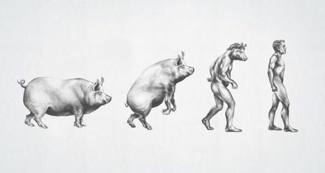 Эволюция всего и вся (47 картинок)