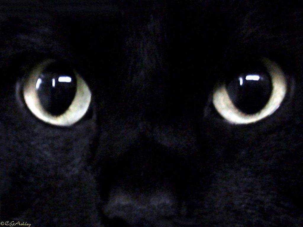 Фотографии котов и кошек [templar's edit]
